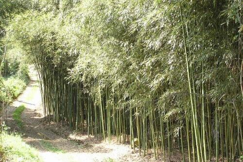 Bambou Keichiku Shinai