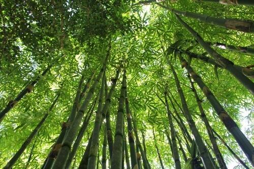 Bambou Madake Shinai